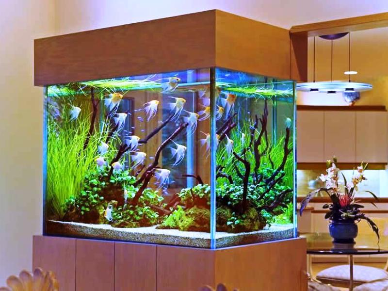 Донный фильтр в аквариуРемонт потолков в частном